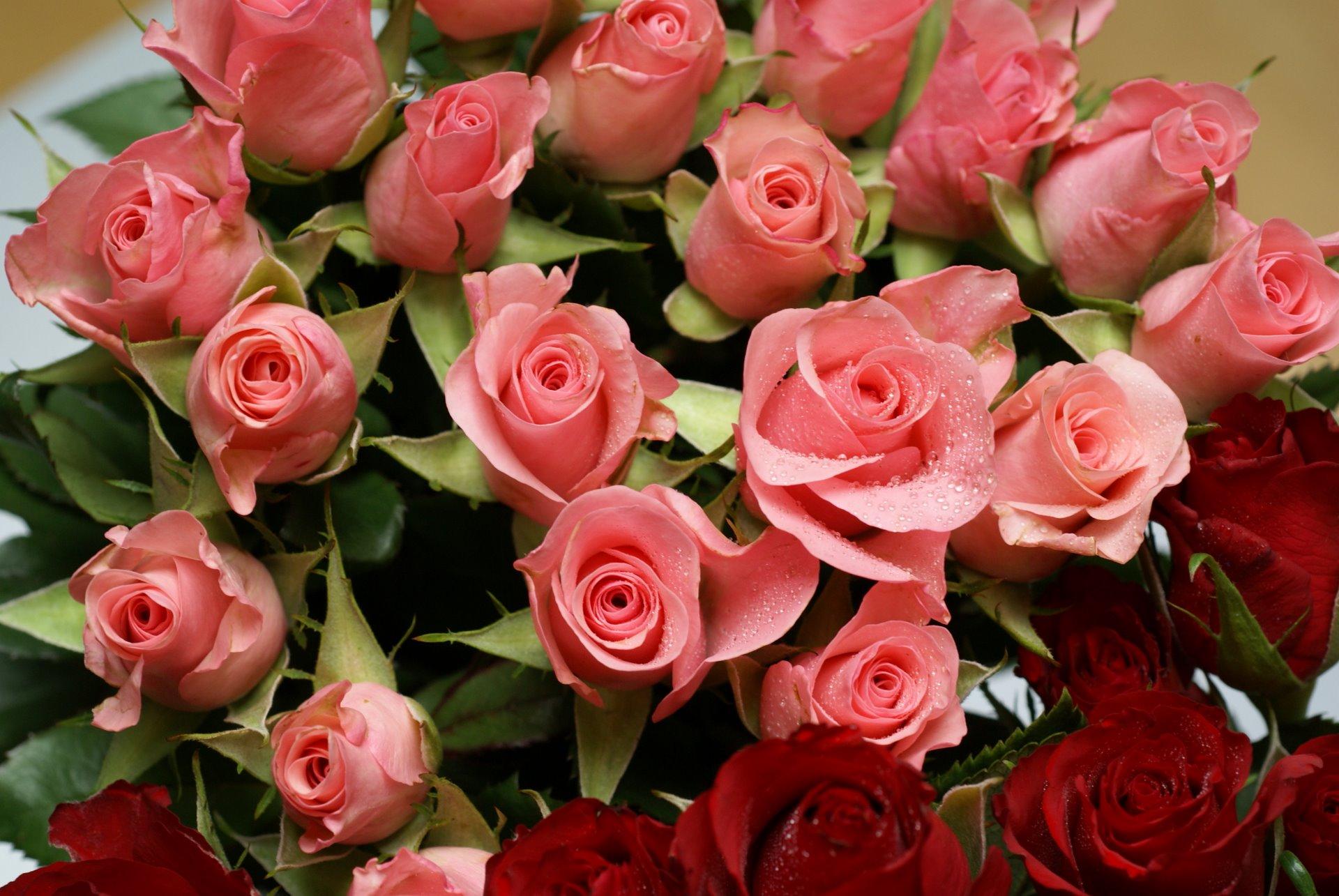 pink-roses-bouquet-romanticdsc01624